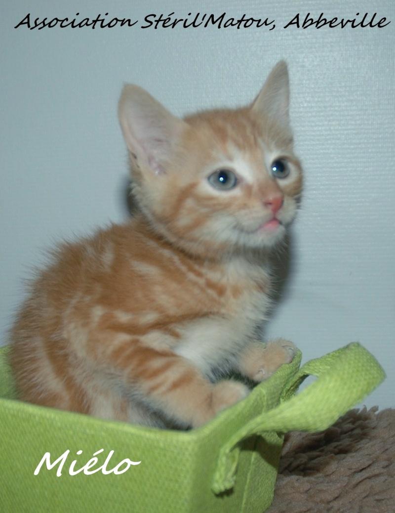 Miélo, chat roux, né le 12 mai 2012, identifié JFM367 Dsc_7011