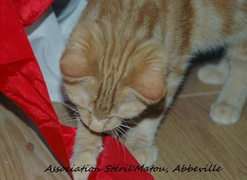 Miélo, chat roux, né le 12 mai 2012, identifié JFM367 Dsc_7925
