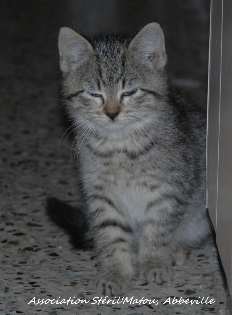 Rosie, chaton tigré, née le 15 aout 2012 Dsc_7927