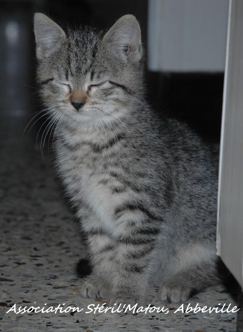 Rosie, chaton tigré, née le 15 aout 2012 Dsc_7928