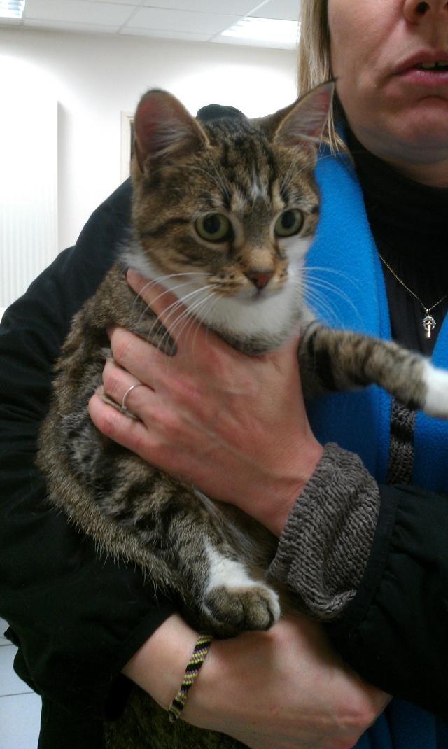 Gloria, chatte tigrée, née le 1er janvier 2011 Imag1310