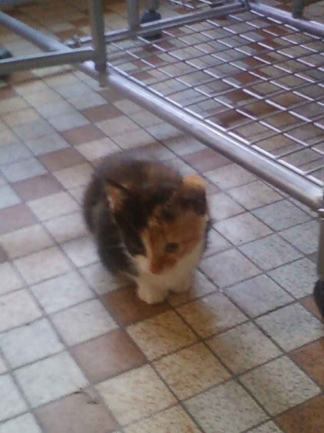 3 petits chatons environ 3/4 mois, 2 garçons et une fille Photo-10
