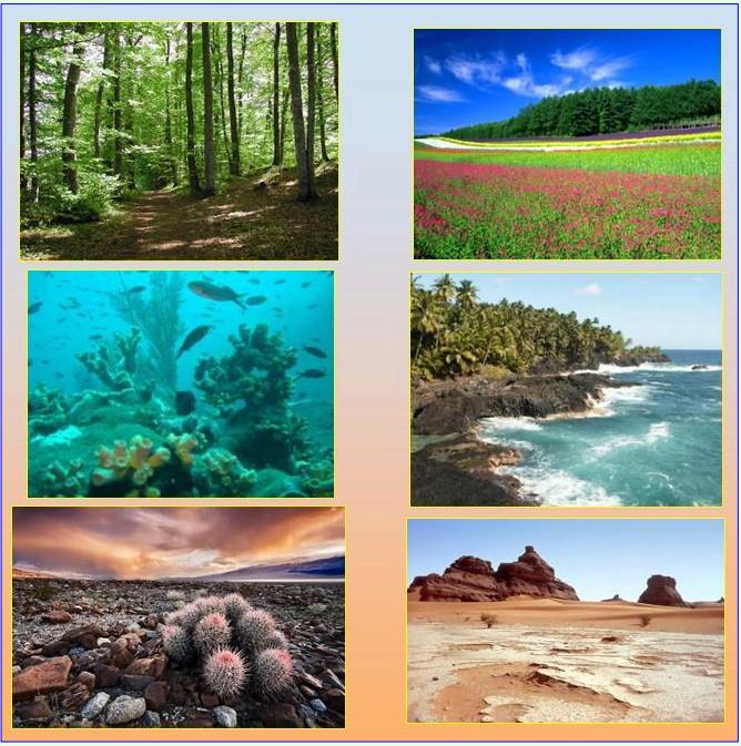 تنوع الأوساط البيئية 14825710