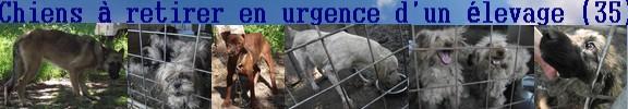 Sujet du message: Chiens à retirer en urgence d'un élevage!!!! (35)SAUVES  Chiens10