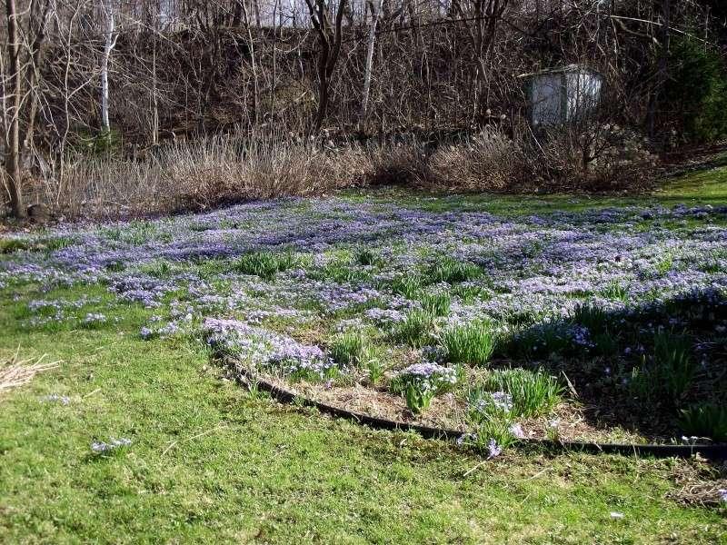le jardin de Ranger au  Québec Dscf4212