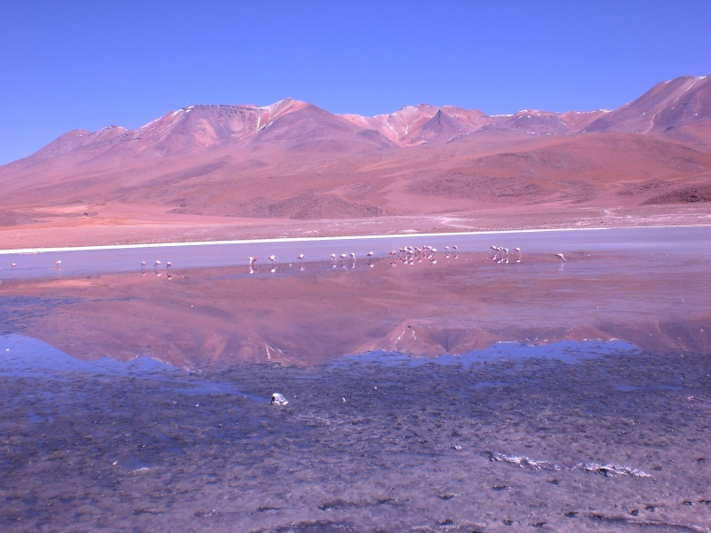 SPECIALE NUNZIANTE Domenica 8 Gennaio 2012 ore 10.00 - Pagina 7 Bolivi10