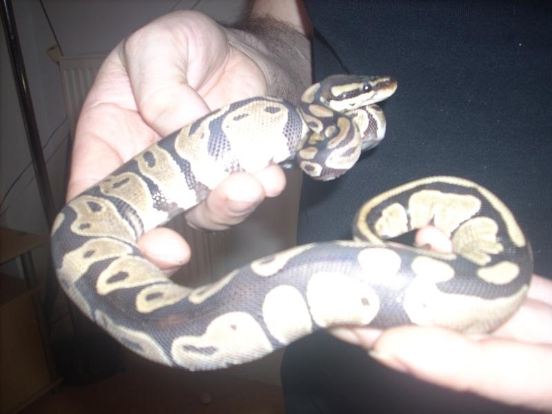 autres reptiles addams family Photo_18