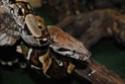 élevage de reptiles et amphibiens
