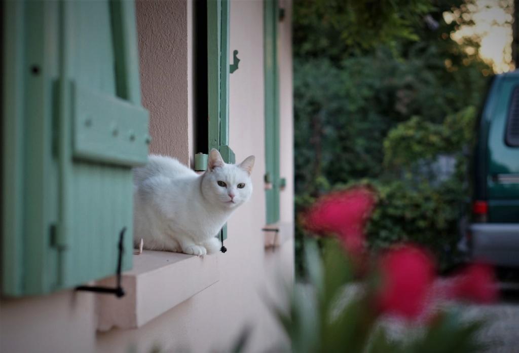 j ' adore mon chat !!! - Page 15 Dsc07118