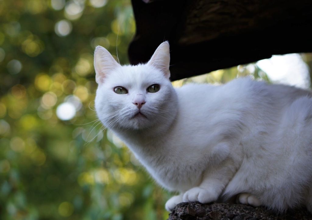 j ' adore mon chat !!! - Page 16 Dsc07141