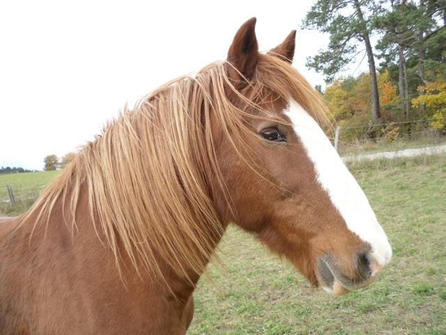 double poney monté attelé  Sam_2313