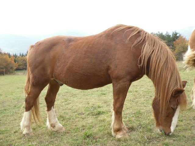 double poney monté attelé  Sam_2314