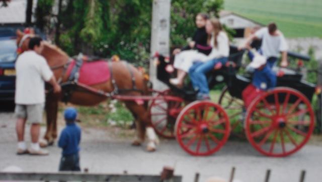 double poney monté attelé  Sam_2440