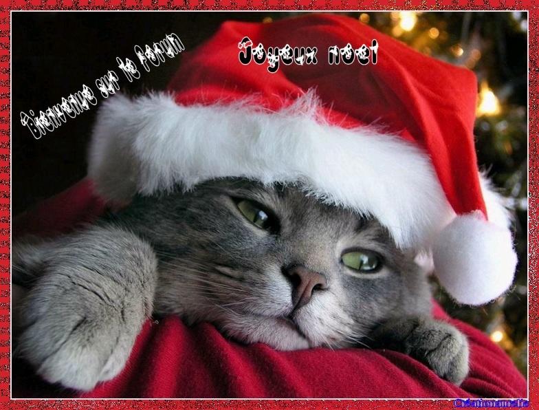 le chat de noel Bannie22