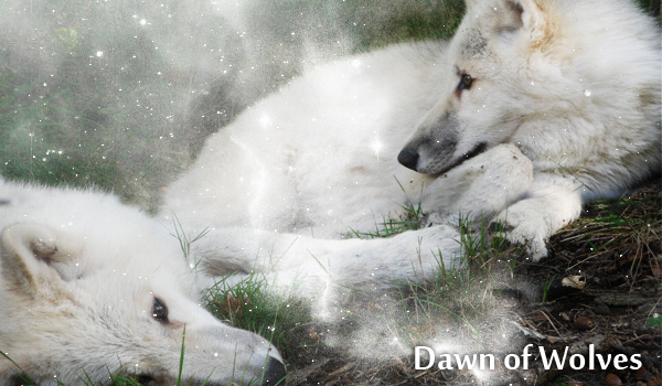Dawn of Wolves