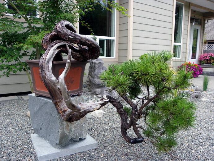 Peter Wilson's Garden Peter_11