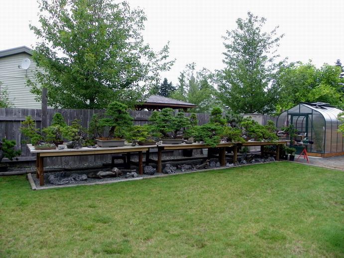 Peter Wilson's Garden Peter_12