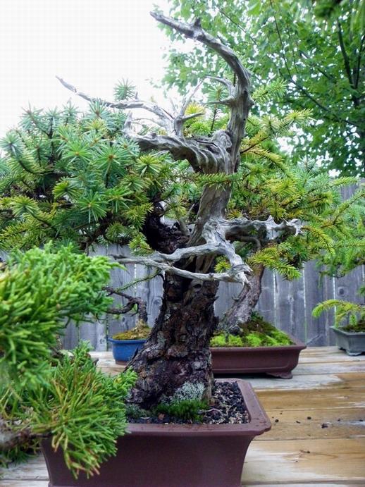 Peter Wilson's Garden Peter_19
