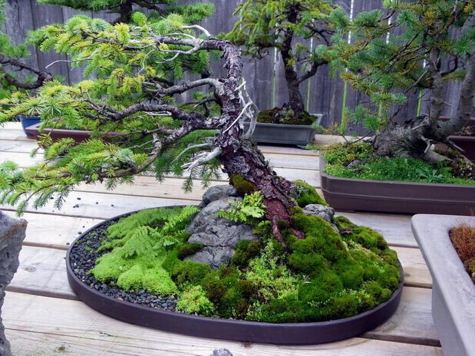 Peter Wilson's Garden Peter_24