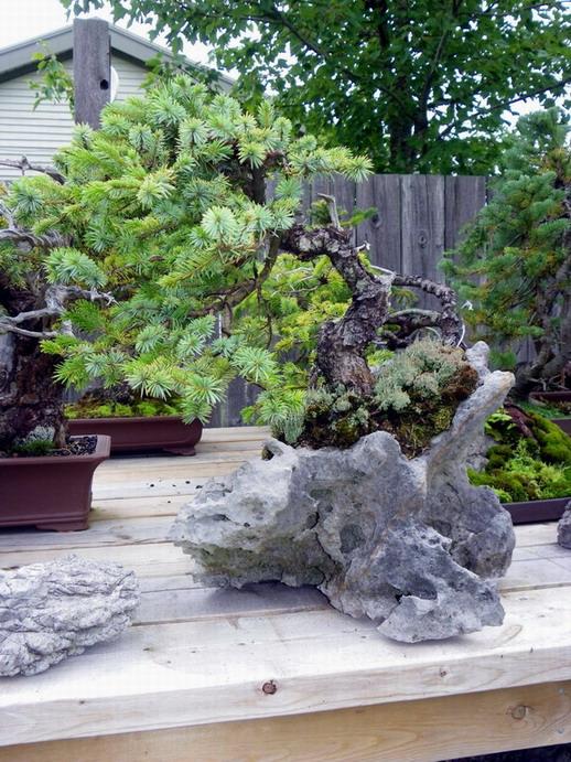 Peter Wilson's Garden Peter_26