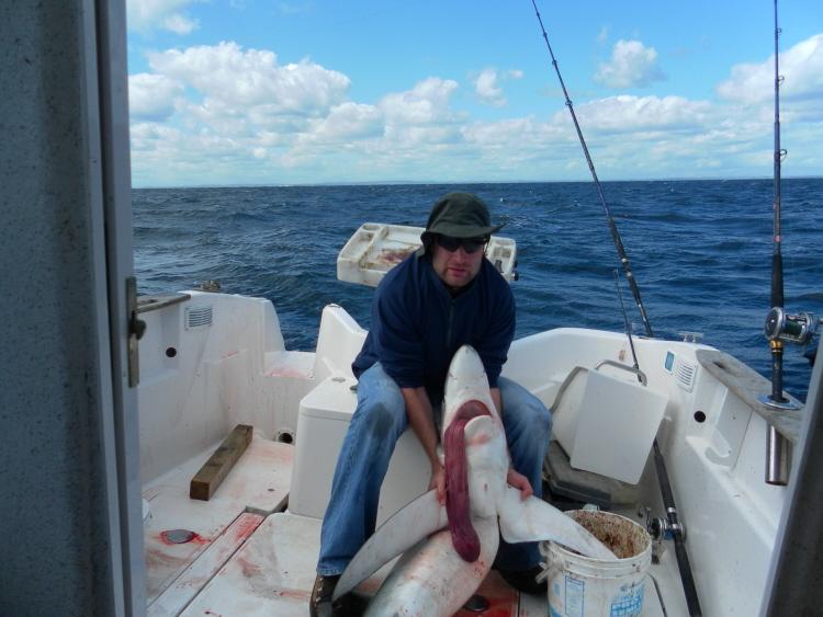 Blue Sharks off Cork Shark111
