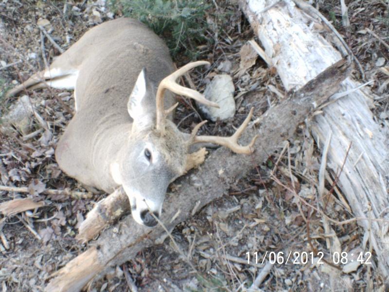 Ma premiere chasse reussite Pict0012
