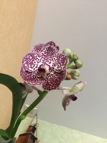 Les orchidées - Page 33 Img_2323