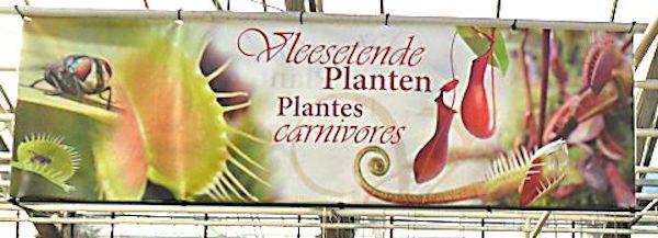 Floralux à Dadizèle en Flandre (Belgique) Floral10