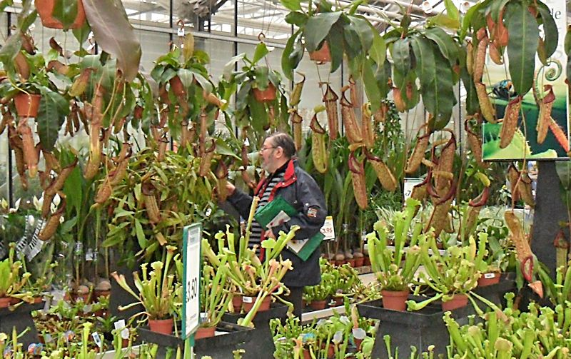 Floralux à Dadizèle en Flandre (Belgique) Foret_11