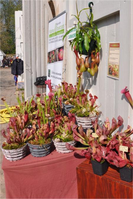 Fête des plantes, St Jean de Beauregard 91, printemps 2012 Jjl_de10
