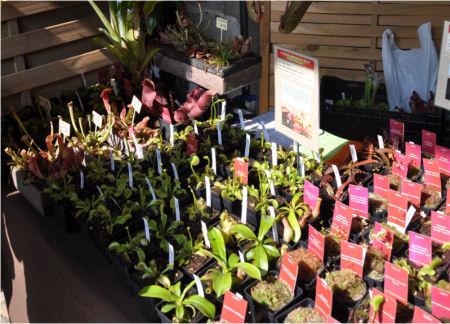 Fête des plantes, St Jean de Beauregard 91, printemps 2012 Jjl_fo10