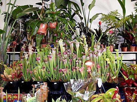 Expo Vente en région parisienne, 24 et 25 mars 2012, Cergy Pontoise 95  Stand_41
