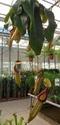 Floralux à Dadizèle en Flandre (Belgique) Nep_mi10