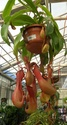 Floralux à Dadizèle en Flandre (Belgique) Nep_ov10