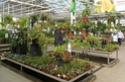 Floralux à Dadizèle en Flandre (Belgique) Plante11