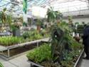 Floralux à Dadizèle en Flandre (Belgique) Plante12