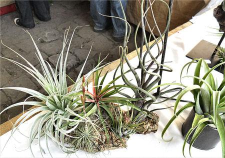 Fête des plantes, St Jean de Beauregard 91, printemps 2012 Tillan16