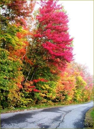 l'automne express - Page 4 Pict0015