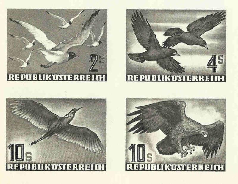 Vögel - Seite 2 Entwar10