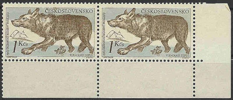 Husky`s und Wölfe  Wolf_c11