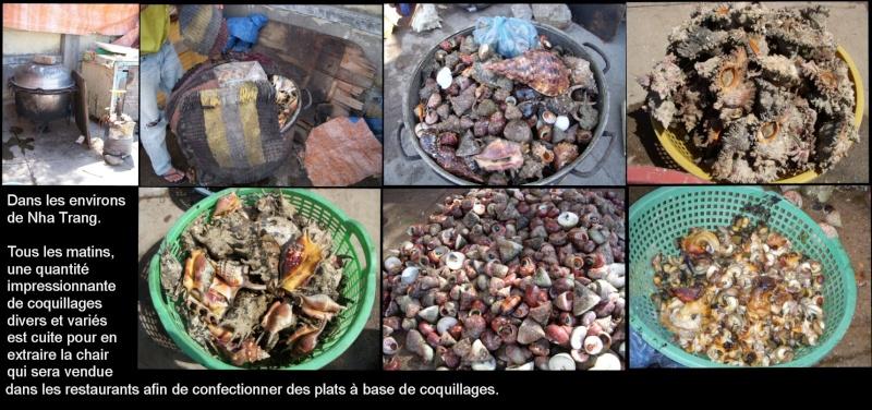 Dégustation de Coquillages au Vietnam Gastro10