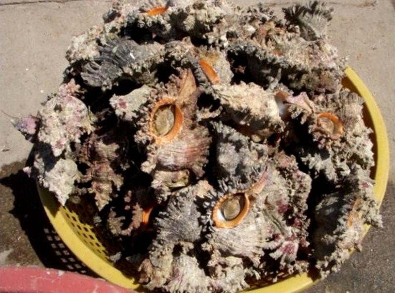 Dégustation de Coquillages au Vietnam Gastro13