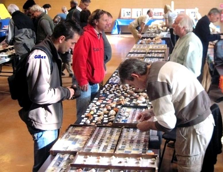 2011 Bourse de Toulouges / Perpignan - 22 & 23 octobre Toulou11