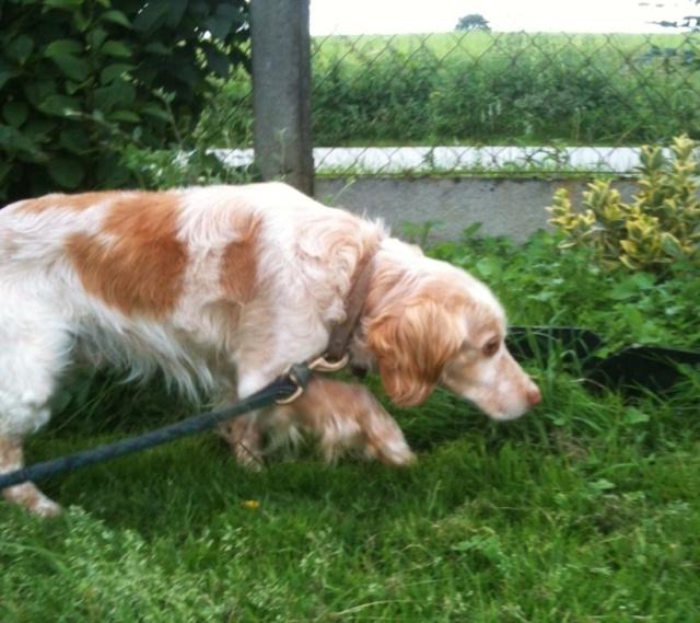 """Elle photographie des chiens """"inadoptables"""", et leur sauve la vie Photo14"""