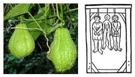 Juxtapositions oulipiennes d'images - Poésie des contrastes _pendu10