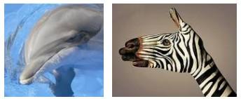 Juxtapositions oulipiennes d'images - Poésie des contrastes _zoo10