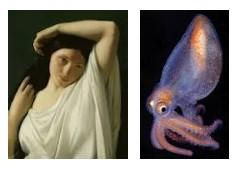 Juxtapositions oulipiennes d'images - Poésie des contrastes Ballet10