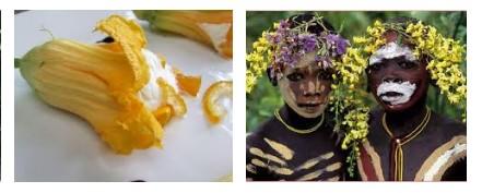 Juxtapositions oulipiennes d'images - Poésie des contrastes Fleurs10