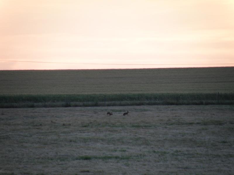 Animaux chassant au crépuscule - 2 juin 2011 Grandv18