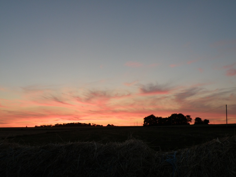 Animaux chassant au crépuscule - 2 juin 2011 Grandv24
